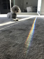 'The Rainbow Dog' by Sophie Benjamin Grimm